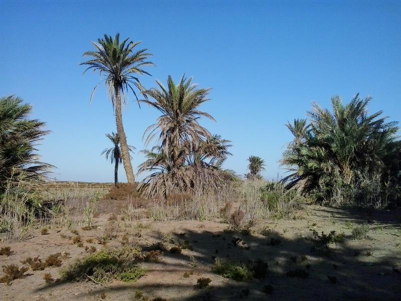 vista  o paisaje característico en la zona, a escasos metros de la playa ideal para paseos .