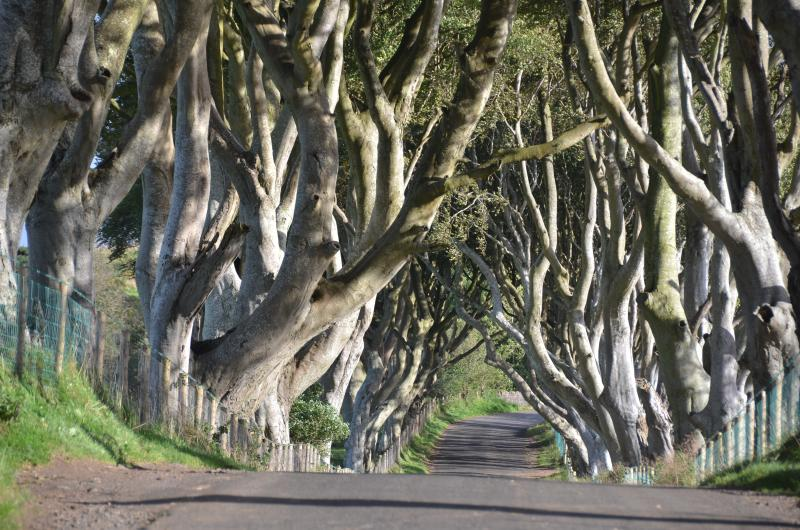 Game Of Thrones dark Hedges nearby