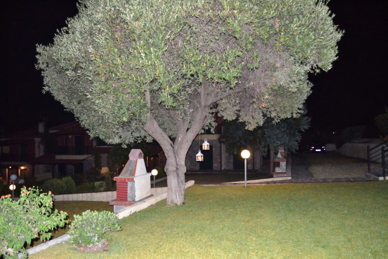 The olive tree by night
