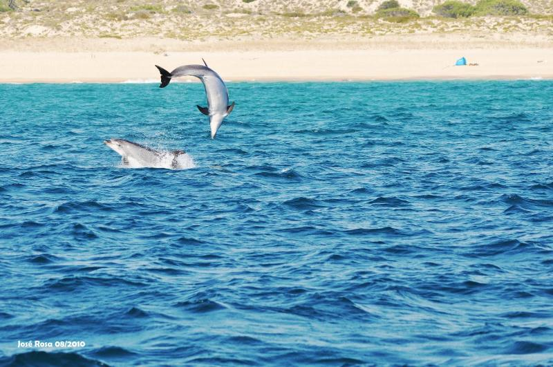 observation of dolphins in SDH