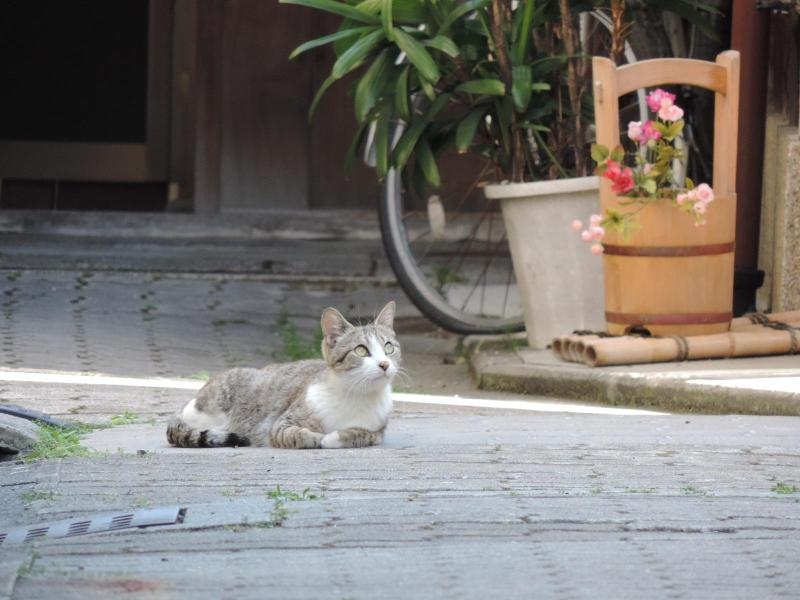 A cat in the alley, imagine of Kyoto