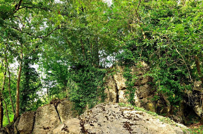 Virgens natureza... a poucos metros da casa