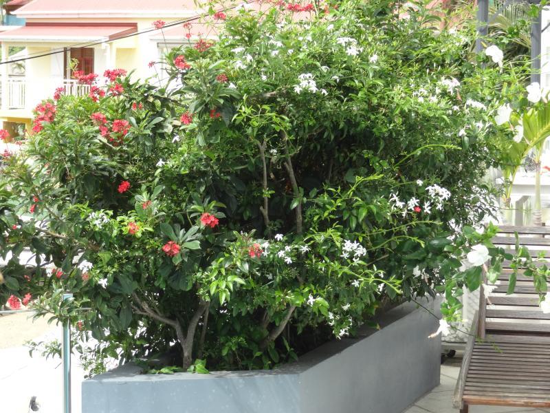 jardinière sur terrasse