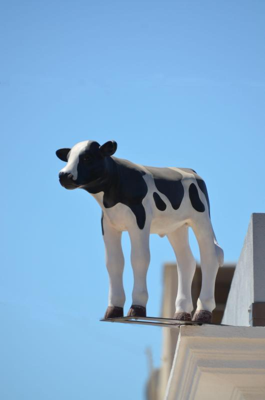 Fortunato the baby 'Vaca'