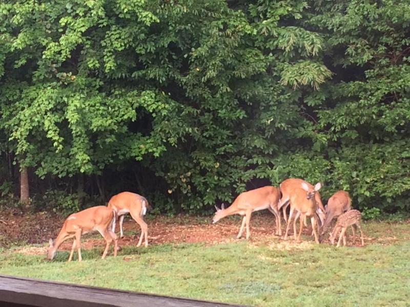 Vistors in Backyard