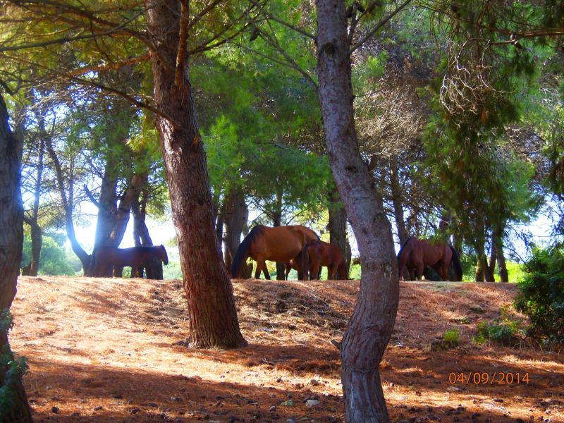 circondato da parco naturale privato