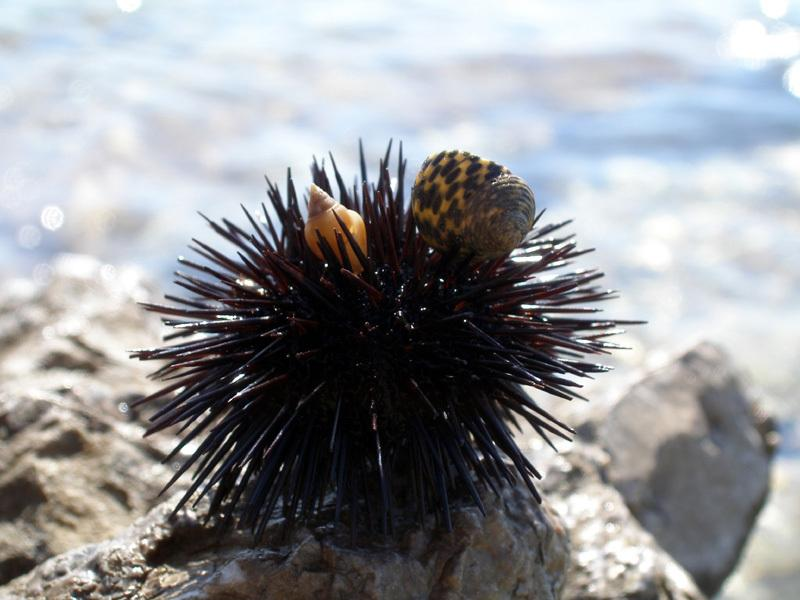 Sea urchin is the name of the studio