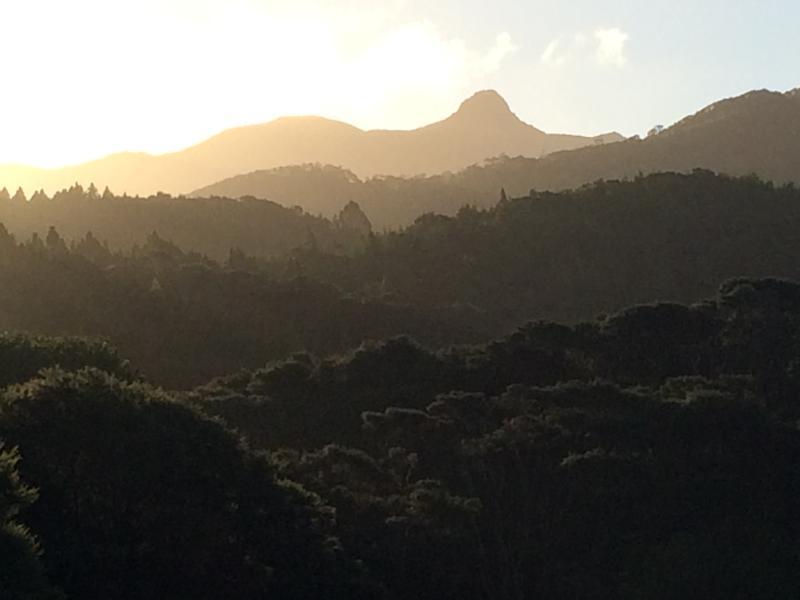Looking across Waiaro Sanctuary to the peak of Moehau.
