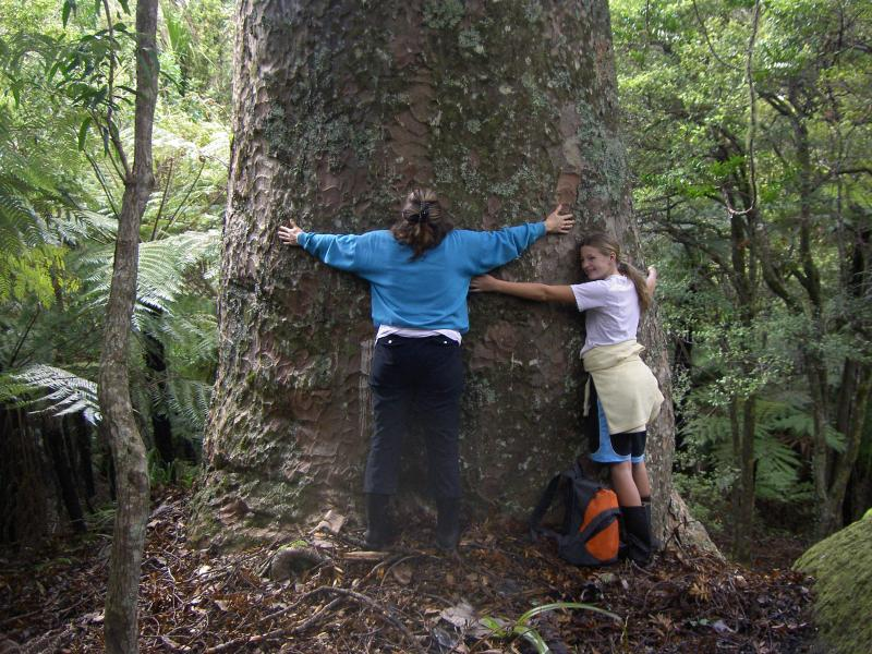 The best trees to hug