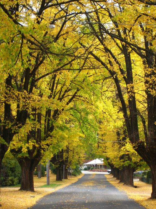 Historic Cobden Street in Autumn