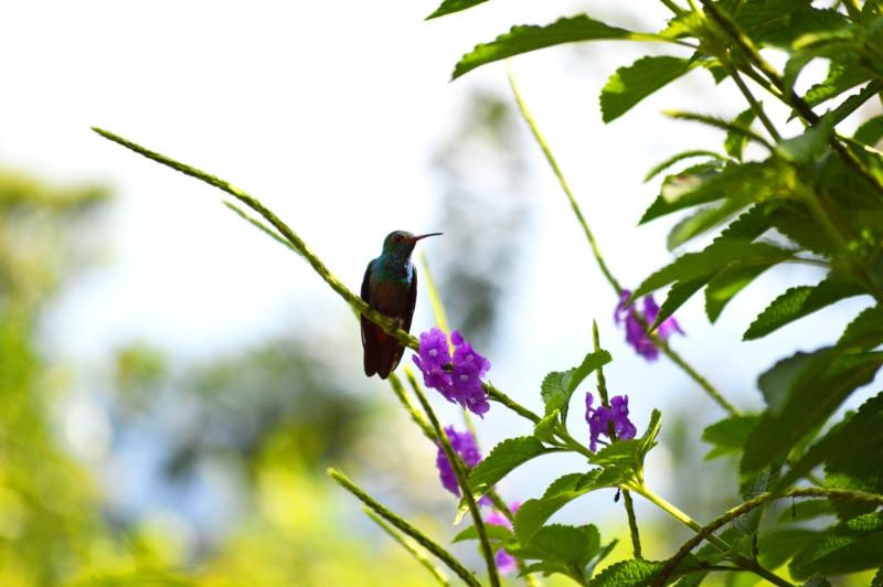 Humming Bird taking a break in our gardens.