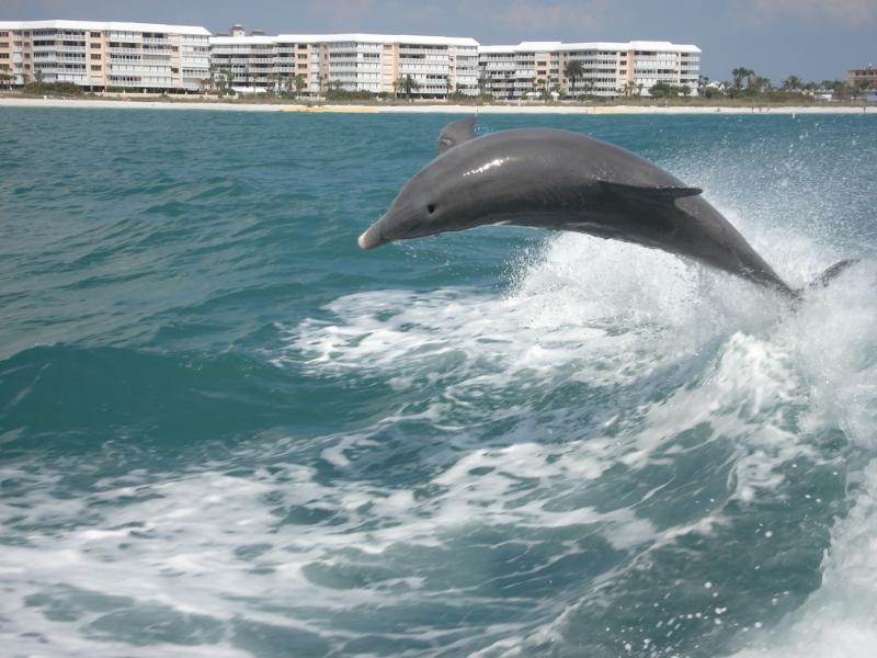 Dolphins are a very common sight - they will play in a wake of a passing boat or frolic near the sho
