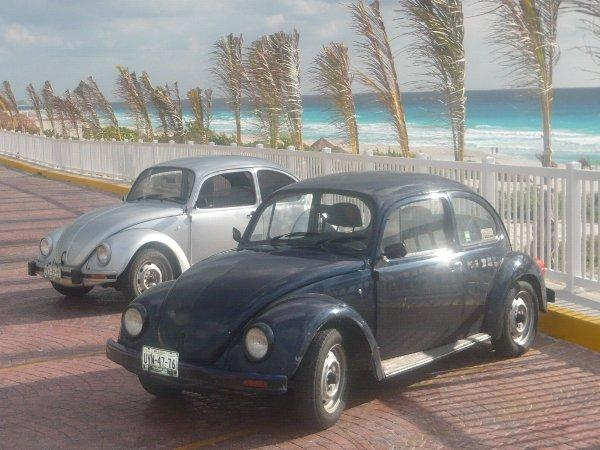 Vw Bug rentals available