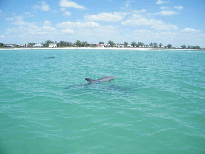 Go sailing with dolphins in the intercoastal waterway or just watch them from shore