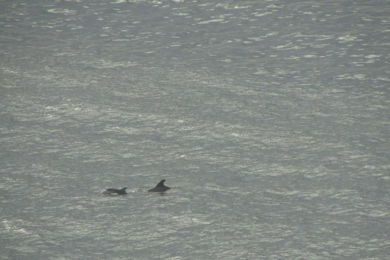 Dolphin watch depuis le balcon (Merci AA pour la photo)