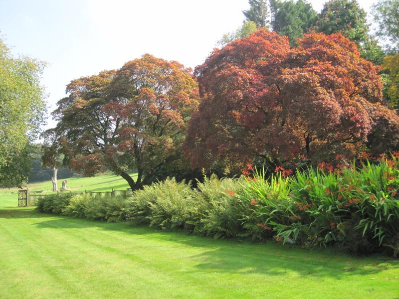 Beautiful autumn colours emerging