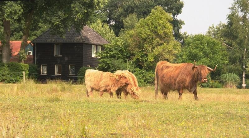 Welkom in het Reestdal, holiday rental in Drenthe Province