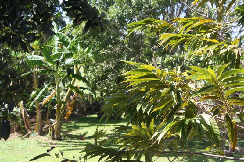 Many fruit trees