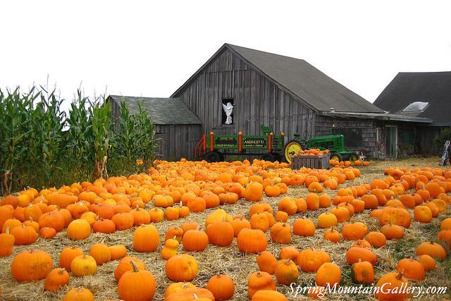 Pumpkin Festival 3rd week of October