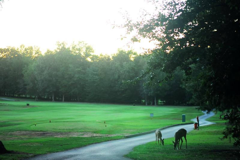 Stonehenge Golf