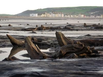Submerged Forest at Borth.