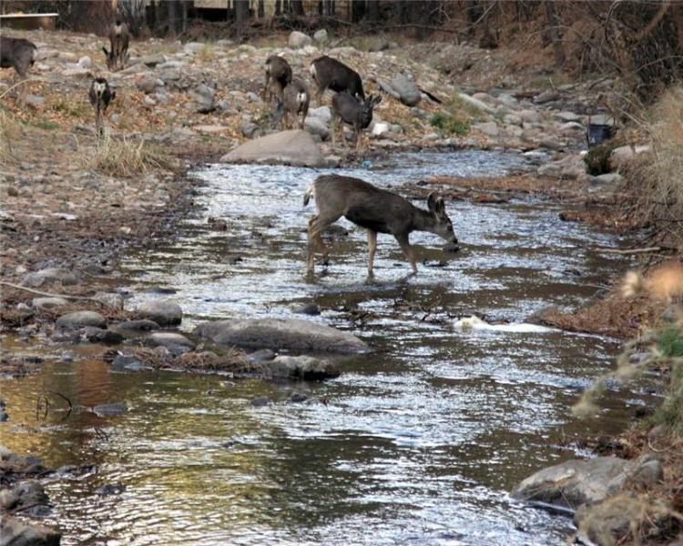 Cerf dans la rivière est visibles depuis la véranda