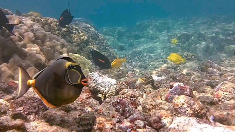 Schermopname van onderwater snorkelen video overkant van de straat op Kahaluu!