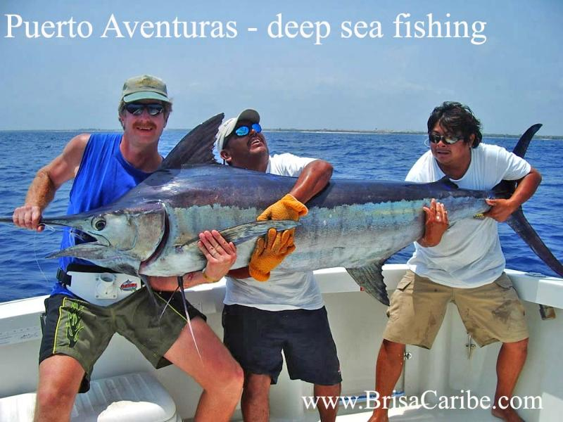 Puerto Aventuras offers many activites including Deep Sea fishing