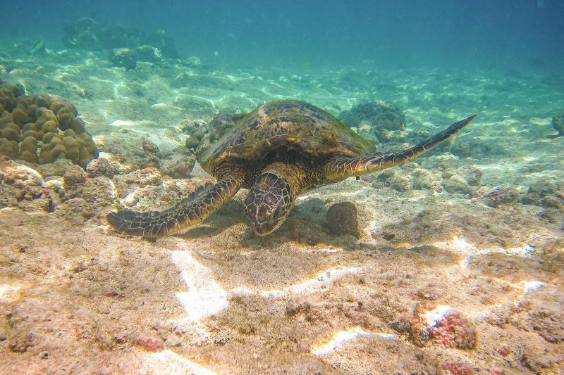 Kahaluu has some of the best snorkeling in Hawaii & turtles are a common site.