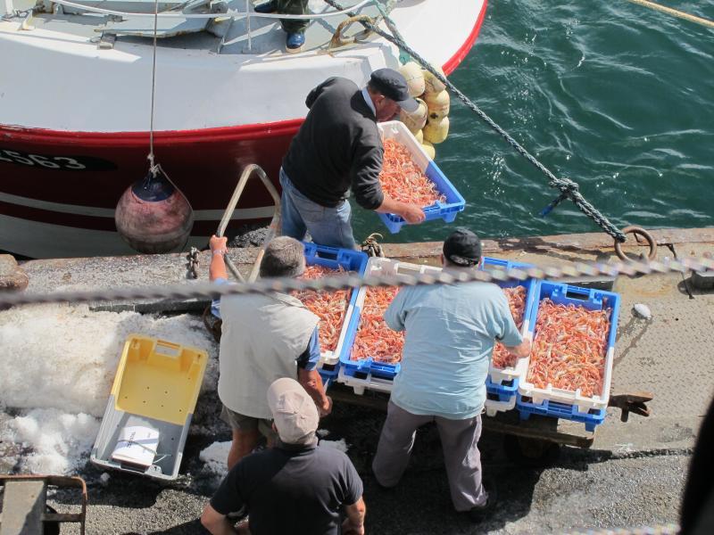 Zona famosa por la elección de maravillosos mariscos frescos. Ir a Guilvinec para ver el regreso de la flota pesquera.