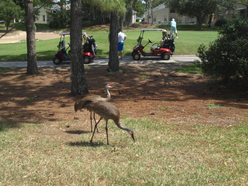 Regular backyard visitors.