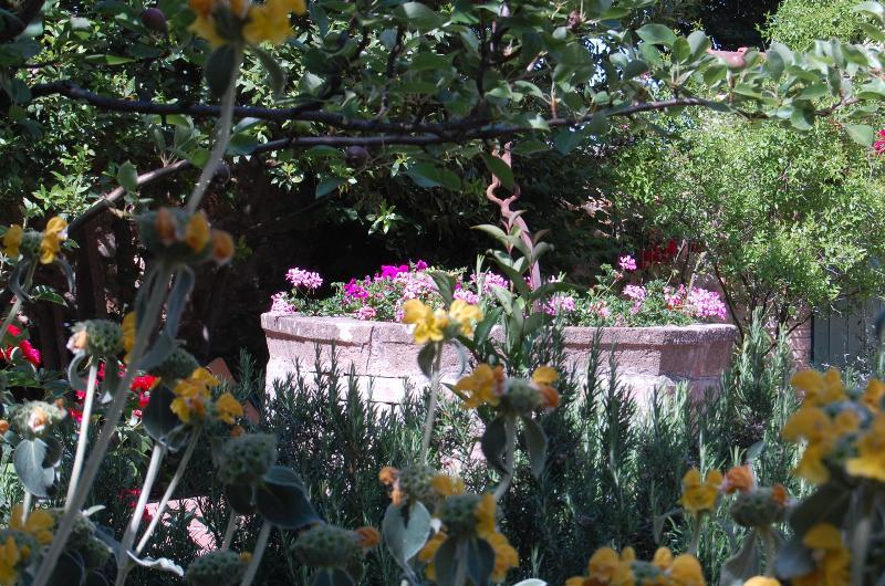 scorcio del giardino fiorito