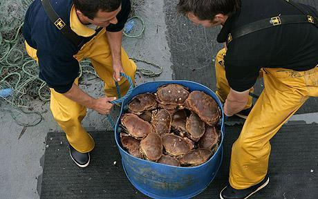 Ventnor is renowned as the best place for fresh seafood