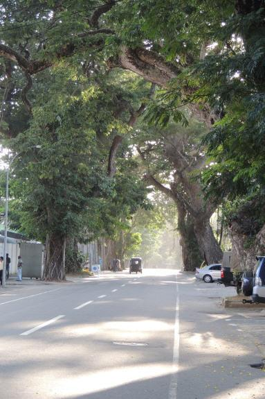 View of Gregory's Road (aka R.G Senanayake Mawatha). The flat is located at a lane off this roa