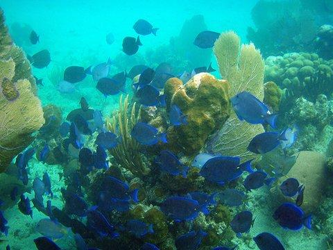 Snorkel the coral reefs off of Culebra Island. Ferry is just 15 minutes away!