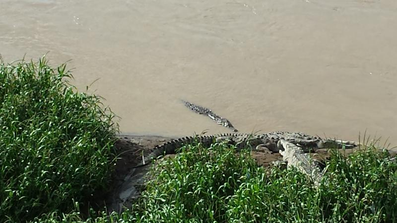 O famoso crocodilo bridge 5 minutos