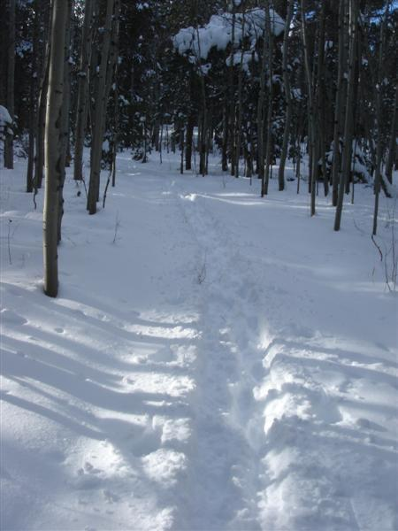 Cross-Country Ski right from your door step