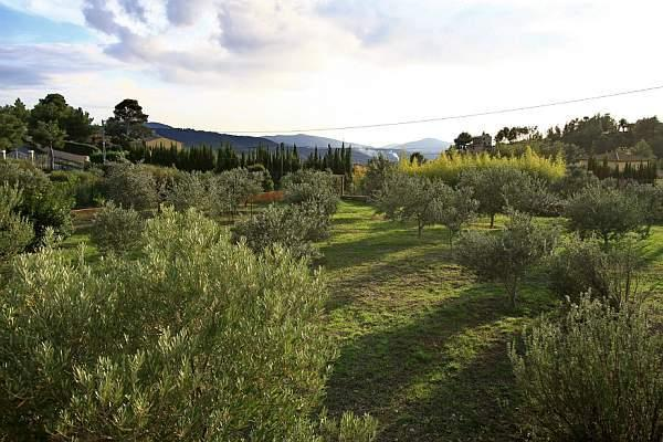 A view of our property, plateau of pretty, planted with olive trees, with a little sea view...