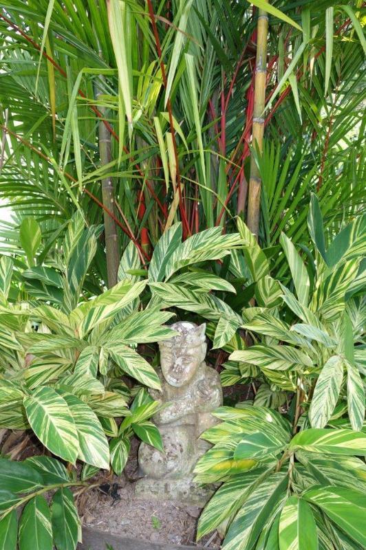Rouge à lèvres tropical Palm