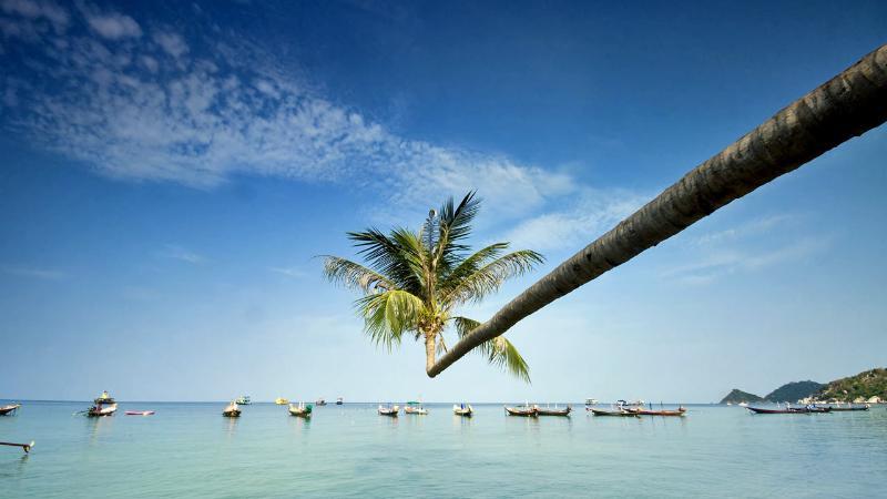 Lotus bar famous palm