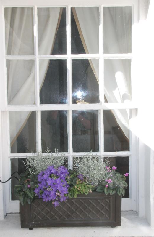 Rear courtyard window box