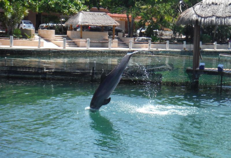 Dolphin discovery is only 5 min away (walking distance)