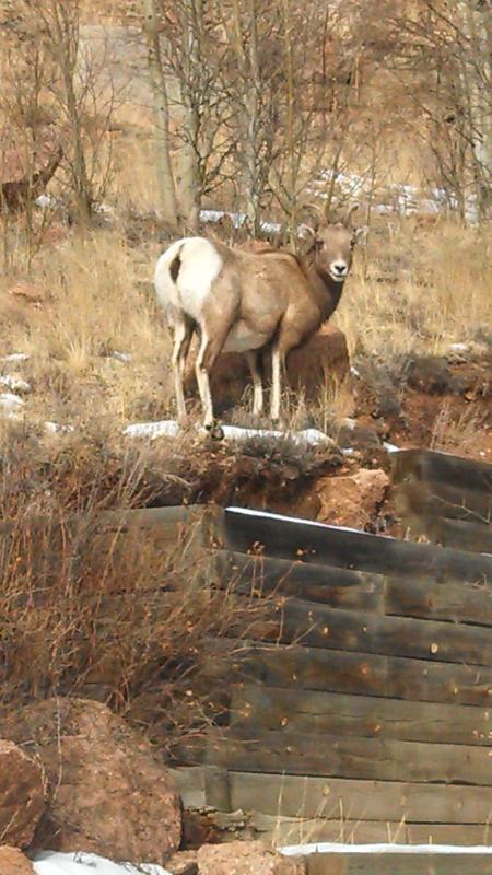Local wildlife in yard!
