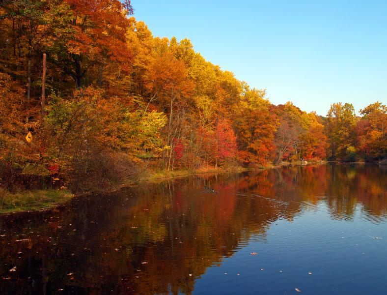 Autumn on Falls Lake