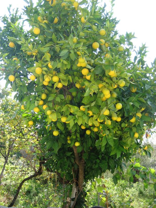 Seasonal garden produce. Help yourself!