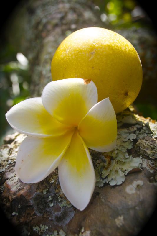 Ekologisk frukt och Hawaiian blommor - en äkta tropisk oas!
