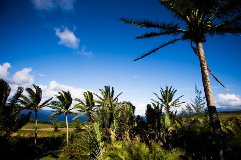 Vacker blå himmel ram palmer