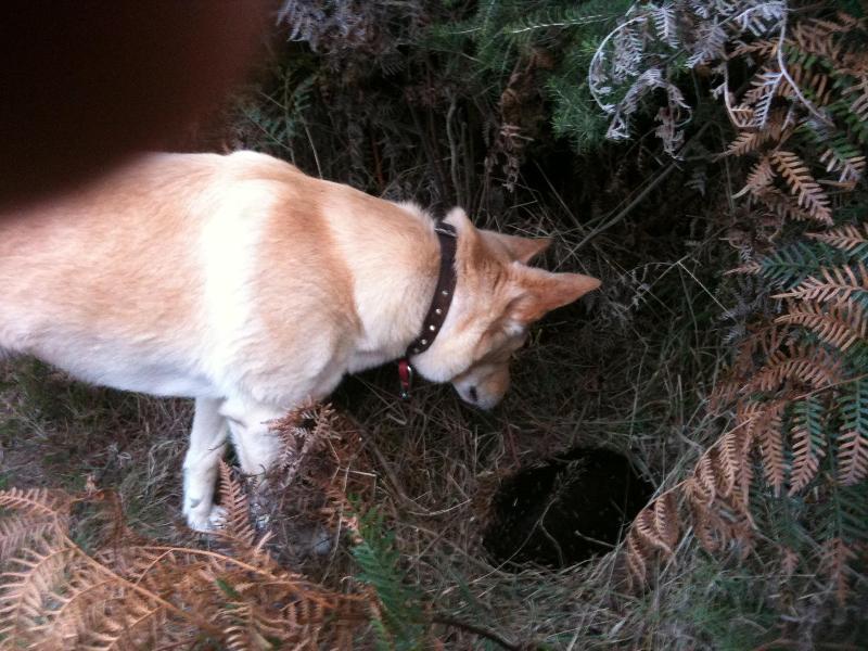 Lucky(the dog) found an ekidna.