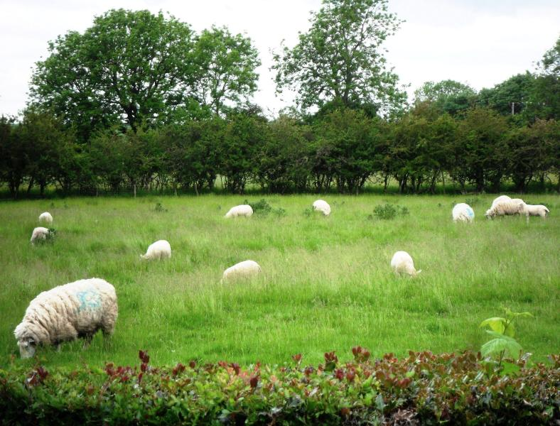 View of sheep meadow from gardens & Pasture View Cottage