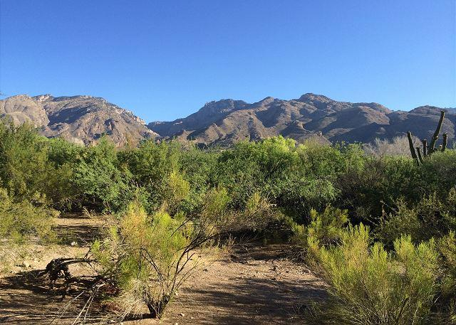 Relax and enjoy spectacular views of the Catalina Mountains!, holiday rental in Tucson